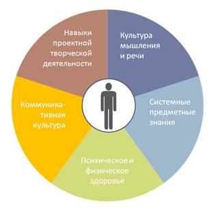 Схематичноформируемое ядро культуры
